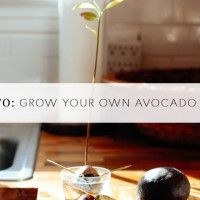 ADVICE: GROW AVOCADO PLANT